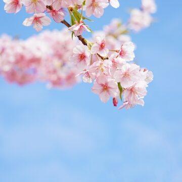【簡単】春のおすすめスキンケア